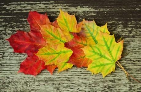 fall-foliage-972737_1920